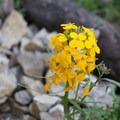 Unidentified species (help us identify it by providing feedback).- Rubio Canyon
