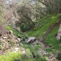 The trail eventually disappears and becomes a scramble through the canyon.- Rubio Canyon
