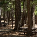 More picnic tables next to the lake.- McArthur-Burney Falls Memorial State Park