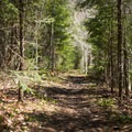 A typical trail view.- Whetstone Gulf Rim Trail