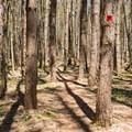 Typical South Rim Trail.- Whetstone Gulf Rim Trail