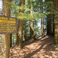 Cliff edges are hazardous.- Whetstone Gulf Rim Trail