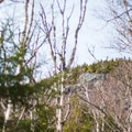 A glimpse at the peak between the trees.- Camels Hump Via the Monroe Trail