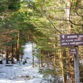 Crossing the Alpine Trail means you are nearing the summit.- Camels Hump Via the Monroe Trail
