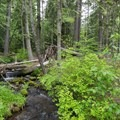 The creek that winds through the campground.- Pebble Ford Campground