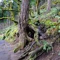 Paved trail between Benson Bridge and the top of Multnomah Falls.- Franklin Ridge Loop Hike