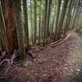 Tree lined trail on Franklin Ridge.- Franklin Ridge Loop Hike