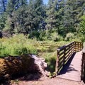 Footbridge along the path to the main pond.- John Neal Memorial Park Campground