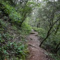 The trail climbs and drops through forested paths.- South Yuba River Trail