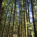 Willamette National Forest along the McKenzie River Trail.- McKenzie River Trail: Trail Bridge to Tamolitch Pool
