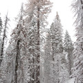 Enjoying the snow along the Tuolumne Grove Snowshoe.- Tuolumne Grove Snowshoe