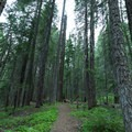 The path through the forest to the Jasper Mines.- Hole-in-the-Ground Campground