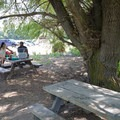 Two visitors picnic under a willow tree.- Baum Lake