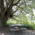 One of the two picnic tables shaded by a willow.- Baum Lake