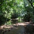 Stream crossing.- Cockscomb Basin Wildlife Sanctuary + Jaguar Preserve