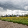 Sunrise Vista is covered in wildflowers throughout the summer.- Sunrise Vista Campground