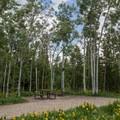 Another aspen site.- Sunrise Vista Campground