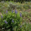 Wildflowers are abundant in the park this time of year.- Steamboat Lake State Park