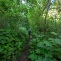 The farther up the trail, the narrower and more overgrown the trail becomes.- Grizzly Creek Trail
