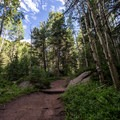 The trail is mostly shaded by aspen and pine trees.- Devils Head Lookout