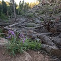 The downed trees at the beginning of the trail are due to a tornado that went through in 2015.- Devils Head Lookout