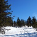 Some of the route follows a snowy forest road.- Potato Hill Snowshoe