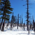 The burnt trees create a pretty contrast against the white snow.- Potato Hill Snowshoe