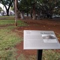 Interpretive signs share the story of the tree, planted in 1873.- Banyan Tree Park