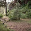 A small campsite along the Grande Ronde River.- Grande Ronde River: Minam to Troy