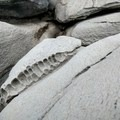 Look for more subtle geological features as you clamber along the rocks.- Dragon's Teeth