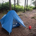 Campsite on Long Island, Willapa Bay National Wildlife Refuge.- Willapa Bay National Wildlife Refuge, Long Island Unit