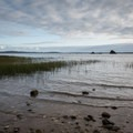 Louse Rocks visible in the distance.- Willapa Bay National Wildlife Refuge, Long Island Unit