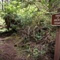 Don Bonker Cedar Grove Trail.- Willapa Bay National Wildlife Refuge, Long Island Unit