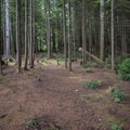 A large site in Pinnacle Rock Campground.- Pinnacle Rock Campground, Willapa Bay National Wildlife Refuge