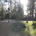A campsite in the yellow loop.- Crane Prairie Campground