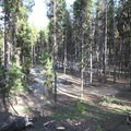 An overview of empty campsites in the orange loop. - Crane Prairie Campground