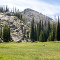 A mule deer wanders along the an open meadow at Lily Pad Lake.- Seven Devils: Windy Saddle to Sheep Lake