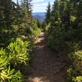 The trail to the lookout.- Gold Butte Lookout