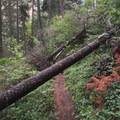 Several downed trees across the trail.- Dead Indian Creek Swimming Hole