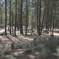 Typical sites at Wyeth Campground.- Wyeth Campground, Deschutes River