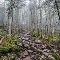 Rocky Trail leading to Mount Garfield.- The Pemigewasset Loop