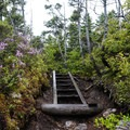 Stairs and wildflowers on Osseo Trail.- The Pemigewasset Loop