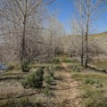 Much of the hike is through sagebrush desert and restored river basin.- McCarran Ranch Preserve River Trail
