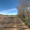 A visible line between restoration and surrounding land.- McCarran Ranch Preserve River Trail