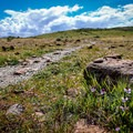 Spring wildflowers along the trail to the peaks.- Twin Peaks via Huffaker Hills