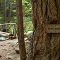 A sign points toward Royal Basin before the trail really starts to climb.- Royal Basin Falls