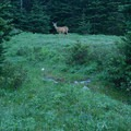 Deer are common in the meadows below Royal Basin.- Royal Basin Falls