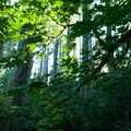 Light streams through the forest in the nature preserve.- Guillemot Cove Nature Preserve