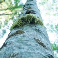 Mossy trees line the trails in the nature preserve.- Guillemot Cove Nature Preserve