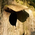 The Stump House.- Guillemot Cove Nature Preserve